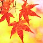 秋の風景を英語で描写してみる(紅葉の色表現)