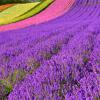 季節の花を英語で描写する – 色表現のヒント